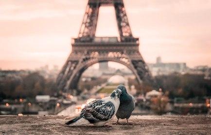 La vie en rose richiama subito Parigi. La capitale francese è qui rappresentata da questa foto di Fabrizio Verrecchia, disponibile su Unsplash