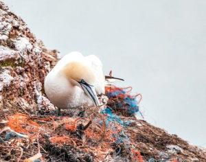 Il problema della plastica in mare riguarda anche gli uccelli, che rischiano di nutrirsene