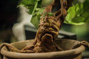 La radice di mandragora nel film Harry Potter e la Camera dei Segreti