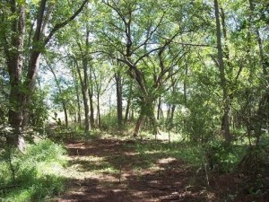 20-Acre lot in McIntosh County Oklahoma #10