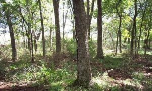 20-Acre lot in McIntosh County #6