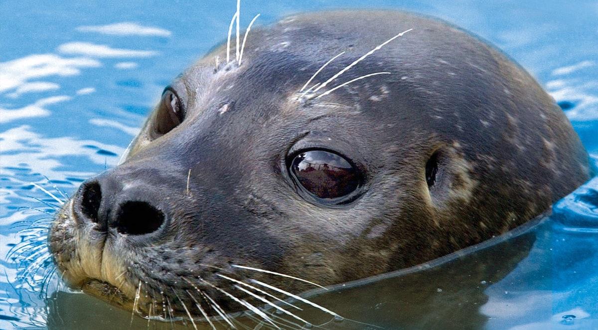 Scottish Sea Life Sanctuary