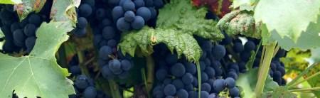 wine-641113_960_720
