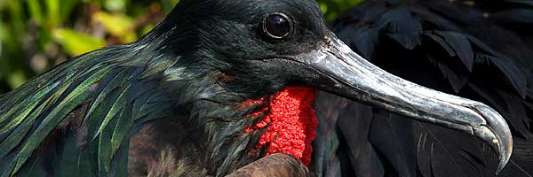 Inti Travel and Tours - Discover Galapagos