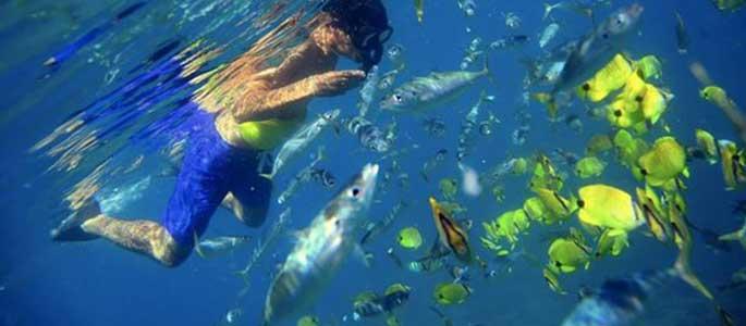Encounter Oahu's Marine Life on Tour