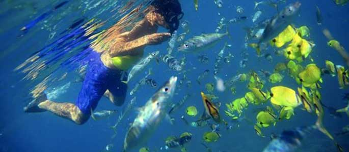 Encounter Oahu's Marine Life on Tour