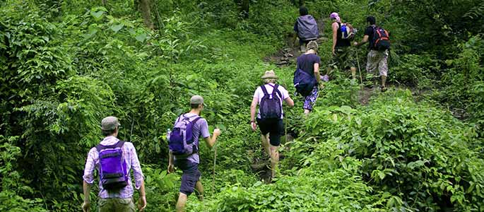 Hike Oahu's Rainforest with an Expert Naturalist Guide