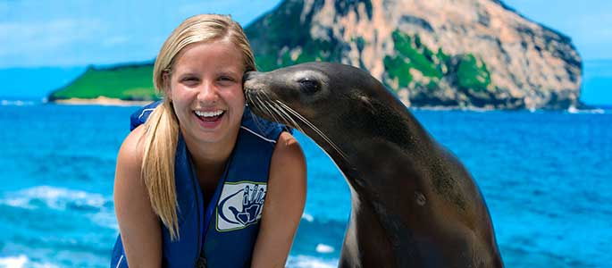Fun Sea Lion Interactions at Sea Life Park