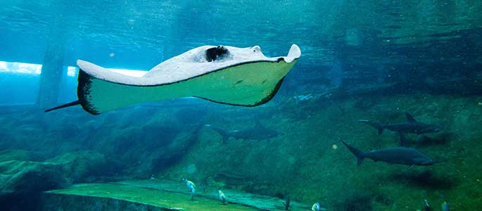 Journey Inside the Shark Tank at Sea Life Park
