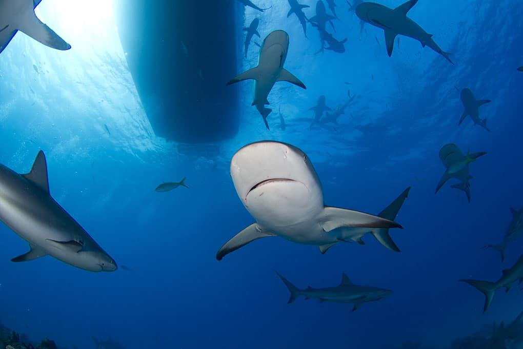 north-shore-shark-adventure