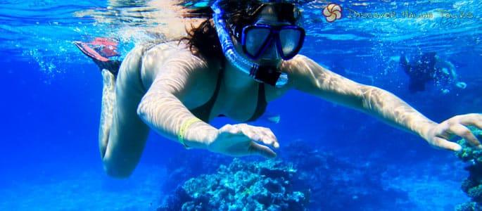 Big Island Morning Snorkel and Dolphin Adventure
