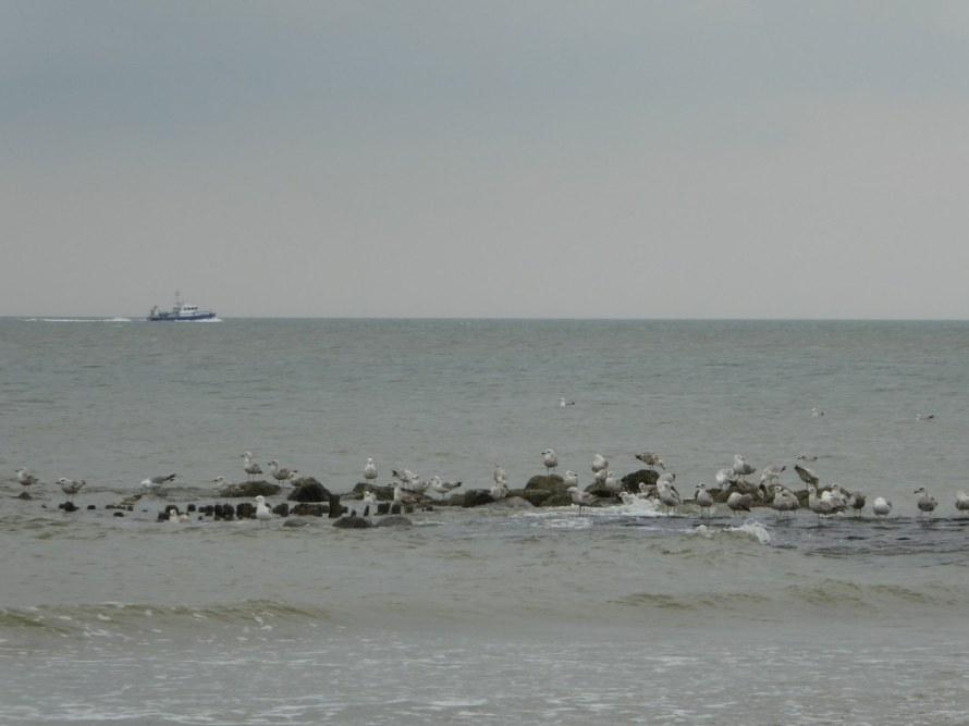 Belgium-coast-6