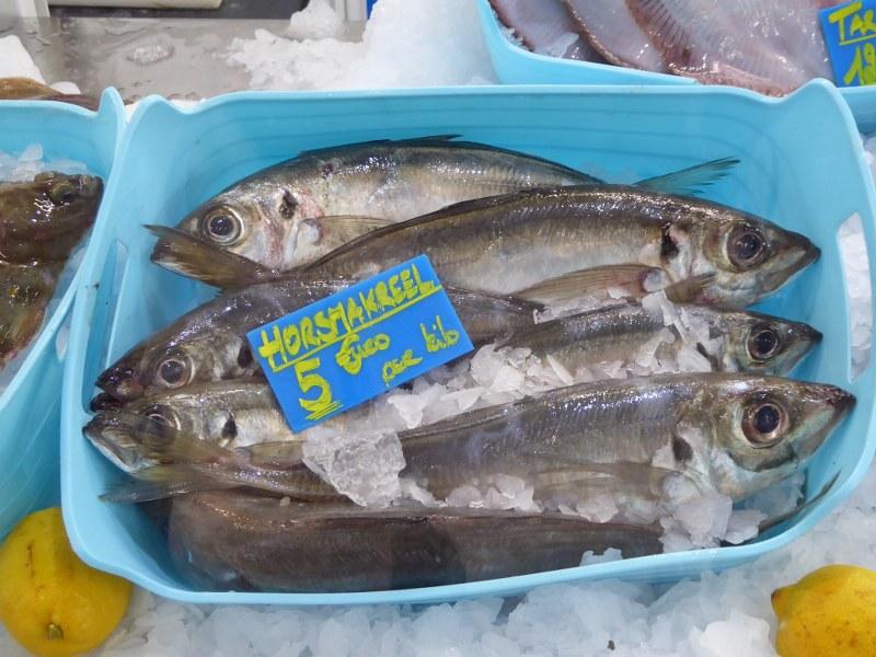 Scad mackerel Oostende