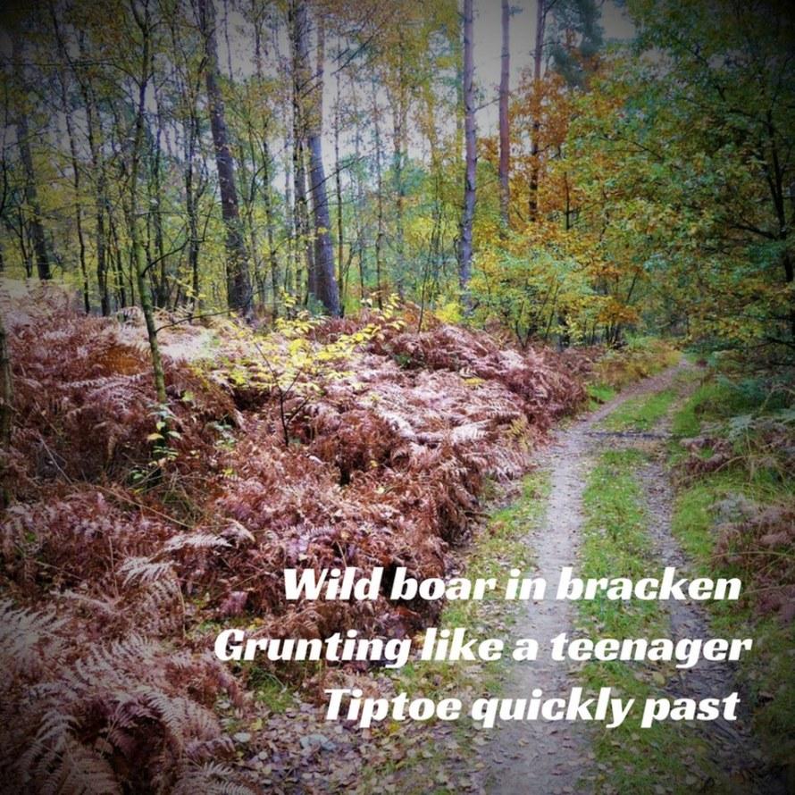 Wild board haiku by Denzil Walton