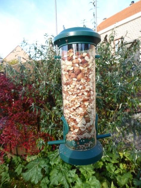 Peanuts for birds