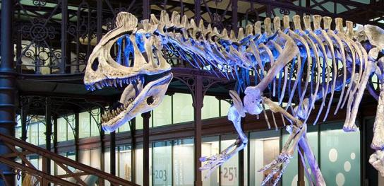 Museum of Natural Sciences Brussels
