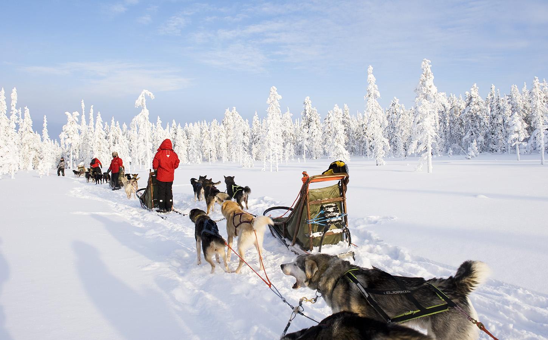 Safaris Finland