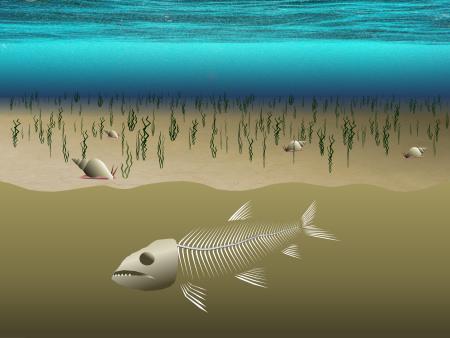 Fish buried beneathe sediment