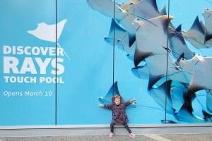 Discover Rays at Vancouver Aquarium