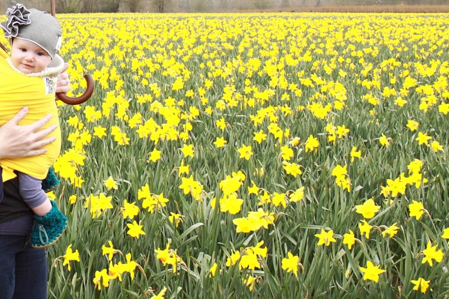 daffodils_02