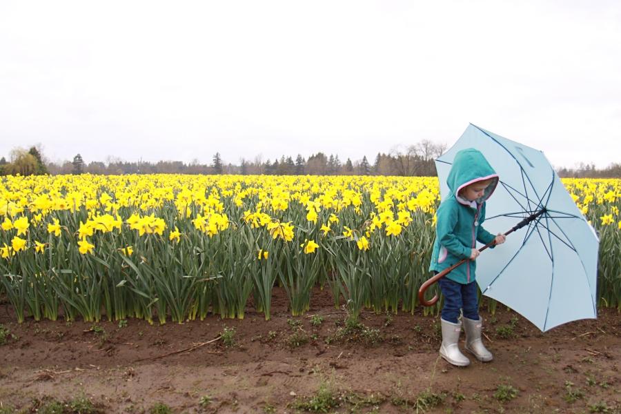 daffodils_10