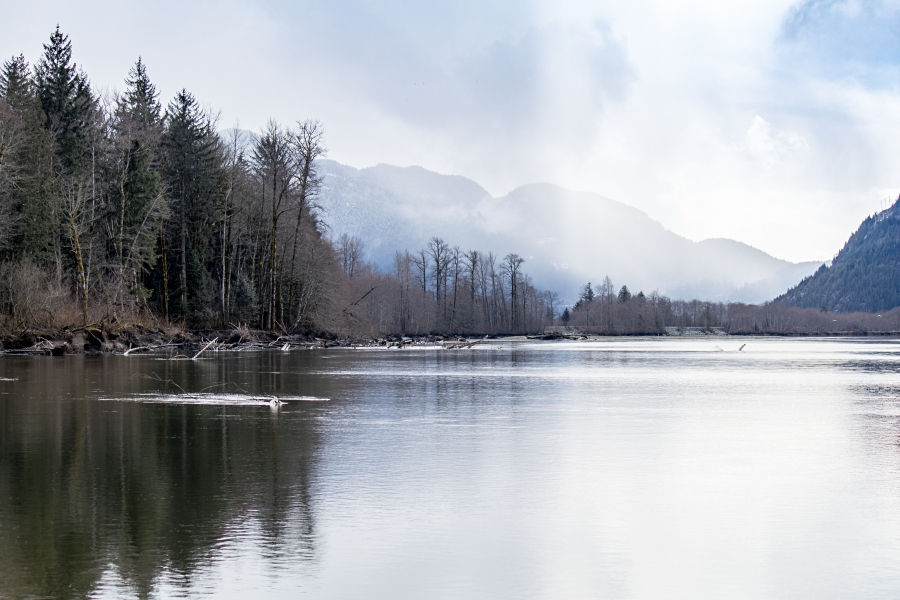 Squamish River Estuary, view of the river and mountains