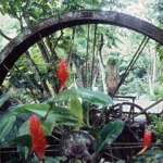 Arnos Vale Waterwheel. Photographer: Cafe.Moka