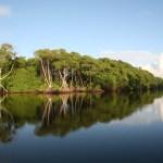 Swampland. Photographer: Stephen Broadbridge