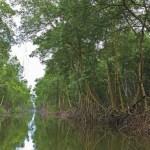 The Caroni Swamp, Trinidad. Photographer: Ariann Thompson