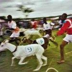 Goat racing. Photographer: Bertrand de Peaza