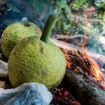 Roasted Breadfruit. Photograph by Nicholas Bajan