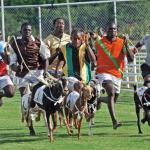 Goat racing in Tobago. Photo by Edison Boodoosingh