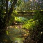 A forest bridge near Biche. Photo by Chris Anderson