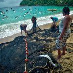Pulling seine at Englishman's Bay, Tobago. Photo by Chris Anderson
