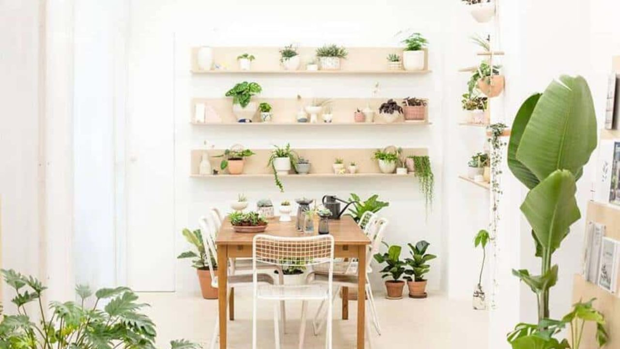 Where To Buy House Plants In Paris Discover Walks Blog