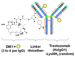 "A) Trastuzumab emtansine. An ADC is a three-block ""engine"" -- antibody-linker-drug -- and each part of the composite molecule has to be carefully selected and assembled. Considered as an armed-antibody, an ADC is a bi-dentate construction where both parts (antibody and drug) of the molecule combine their effect to ensure selectivity and potency. The role of the linker arm is of paramount importance demanding a fine tuning to execute the controlled release and delivery of the two active components in the tumor environment."