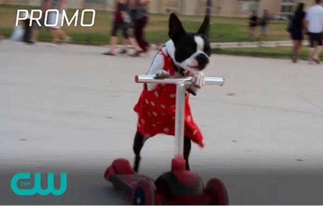 "CW's ""World's Funniest Animals"" Dog Piano Promo"