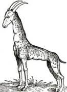 Il modello originale doveva essere una giraffa, ma le corna da stambecco e la pelle a macchie anziché a chiazze la rendono irriconoscibile.