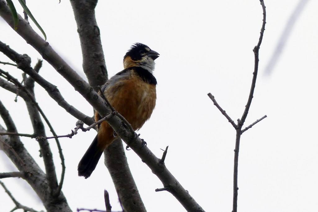 Avistaje de aves en la reserva Los tres cerros (ex legado Deliot)