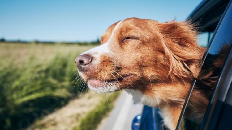 Cómo entrar a Chile con perros