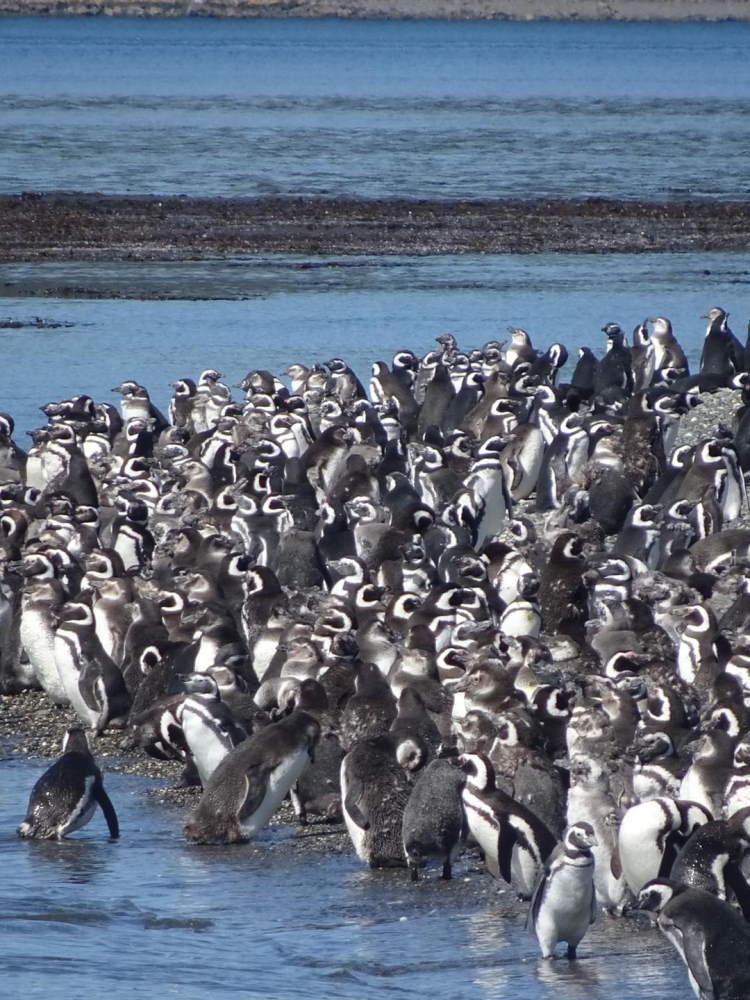 Permiso de circulación en Tierra del Fuego