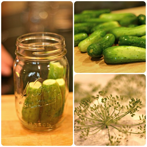 pickle canning