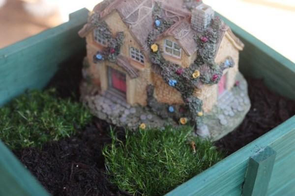 Irish moss for grass for fairy garden