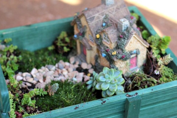 Fairy Garden landscaping plants