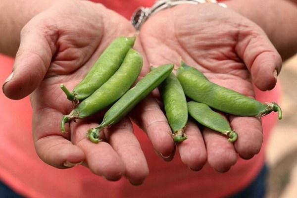 peas from garden