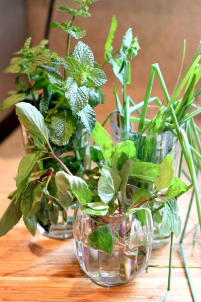 fresh basil mint and chives