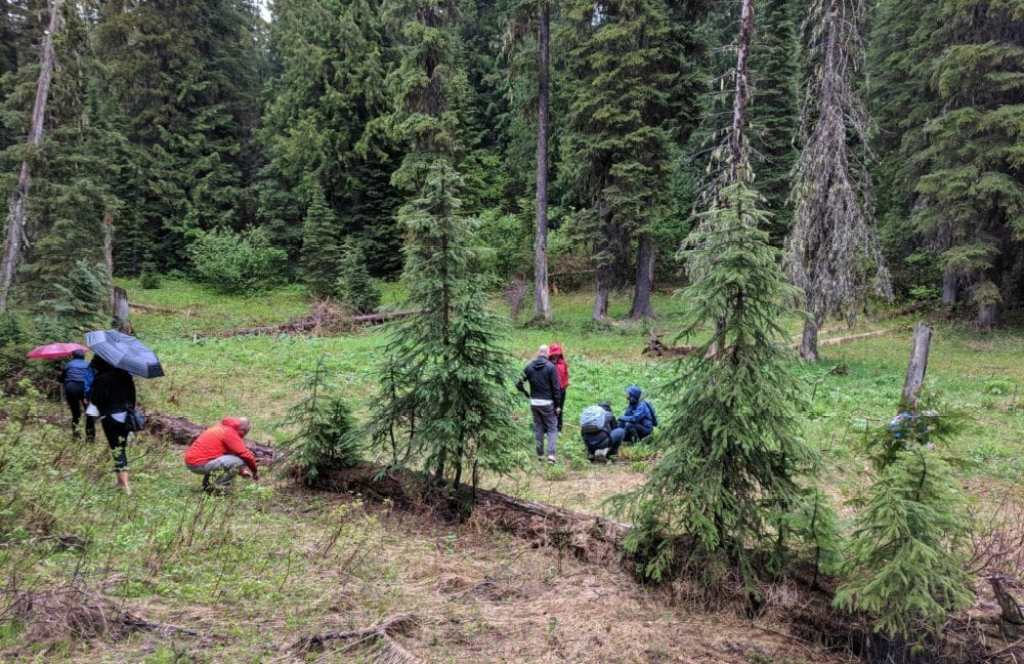 Group Foraging at Island Lake Lodge - Untamed Kootenays #foraging #wildedibles #seasonal #ediblenature