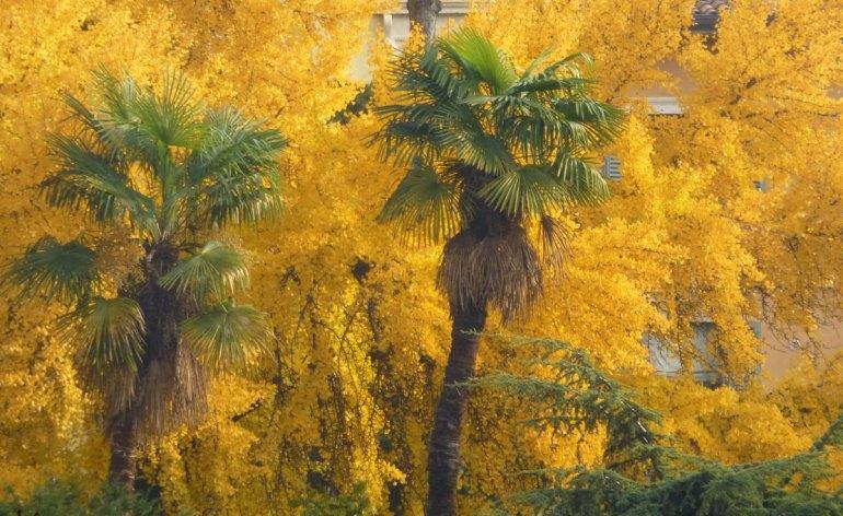 20121124-veronacentrostoricopalmealberiautunnogiallidismappa