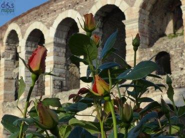 rose con arena di verona sullo sfondo per verona in fiore 2013