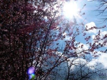 fiorirosafioridipesco